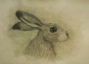 hare face drawing