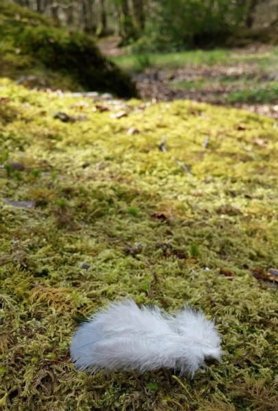 Feather on a bed of moss