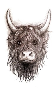highland cow charcoal drawing