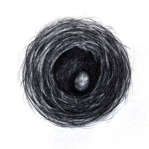bird nest drawing