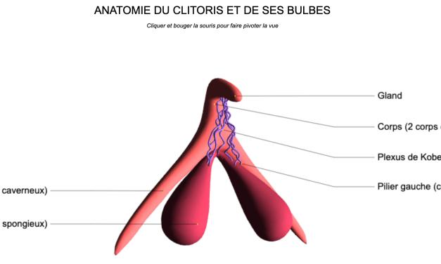 Clitoris: le grand retour