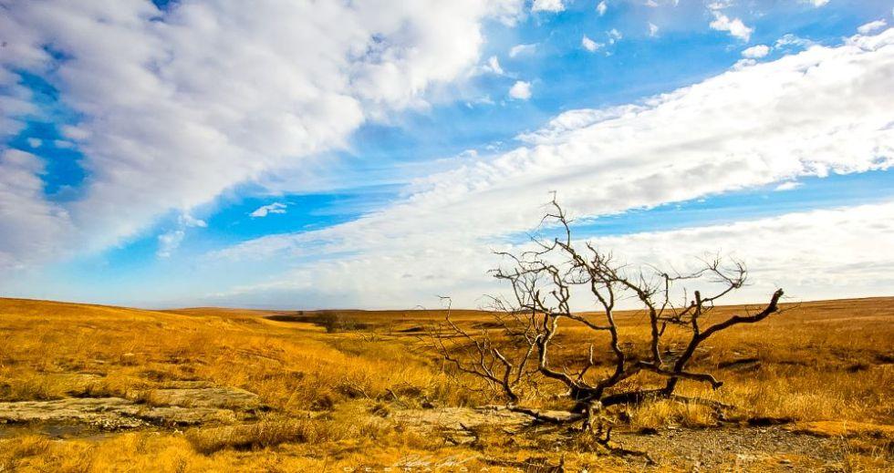 fine art photography flint hills kansas great plains lone tree