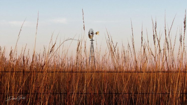 Flinthills, Kansas, barb, barb wire, country, country school, ecosystem, grass, grassland, midwest, pasture, prairie, rock wall, school, tall grass prairie