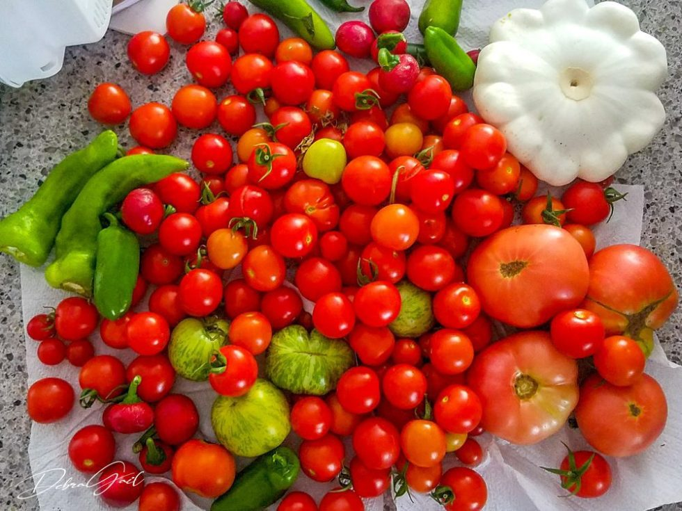 cherry tomatoes peppers squash vegetable garden debra gail photography