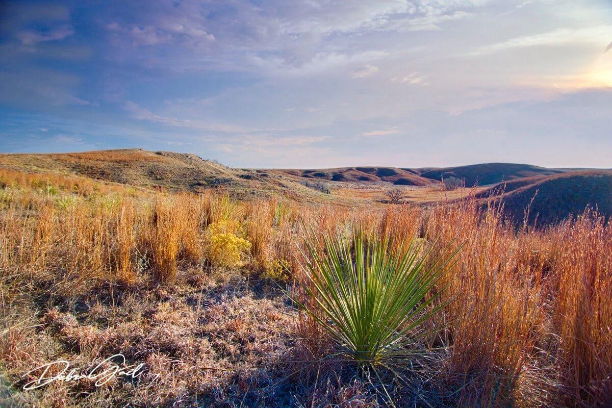 high plains prairie kansas debra gail