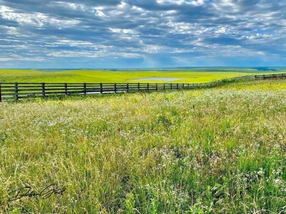 flint hills scenic byway cattle pens debra gail