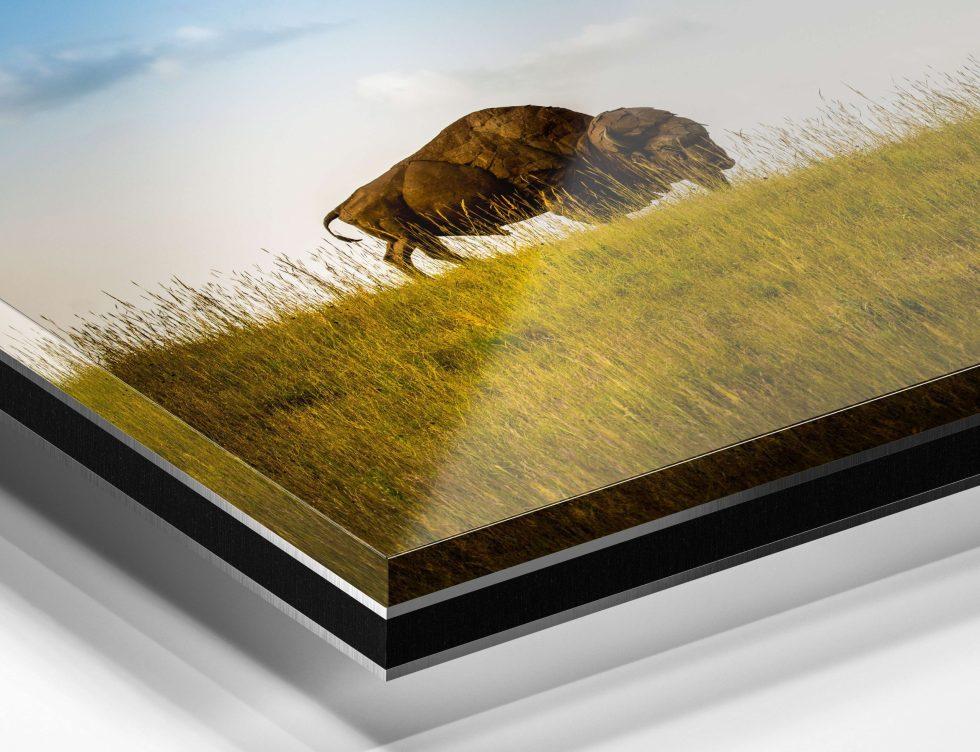 trulife acrylic print bison
