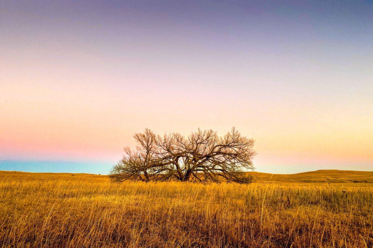 landscape and wildlife photogaphy