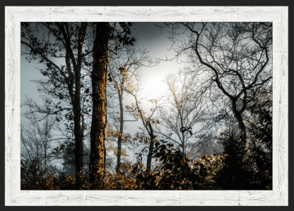 foggy woodlands best photography debra gail white barnwood framed