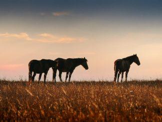Wild Horses 8928