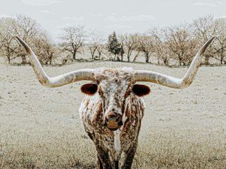 longhorn wall art debra gail