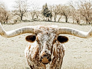 best seller longhorn photography wall art debra gail