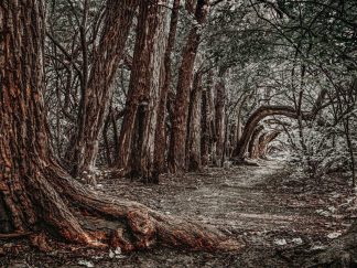 woodland trees wall art forest print tree tunnel debra gail photography