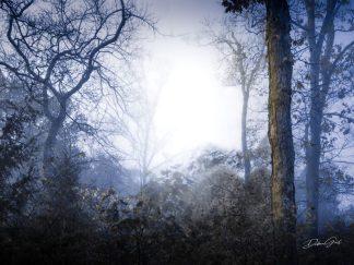 wholesale retail ranch collection woodland fog wall art debra gail
