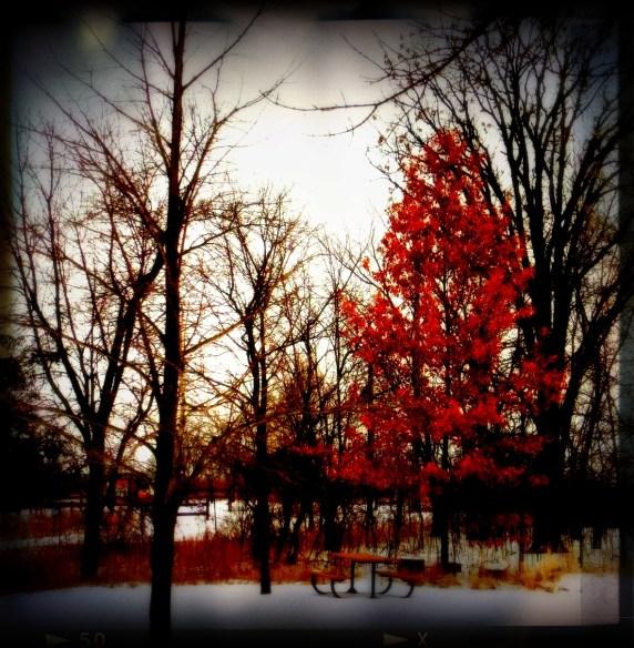 Photo Season Jan 4