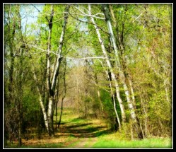 May 2 Hike Murphy Hanrehan