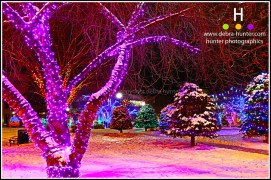 Red Deer City Hall Park - Christmas
