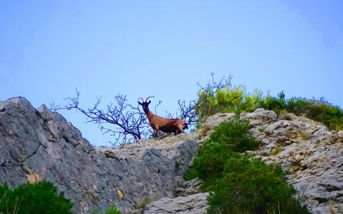 Mind-set, goat on top of hill