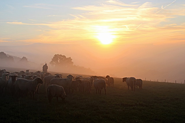 sheep and shepherd at sunrise. God as our CEO.
