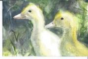 glowy ducklings