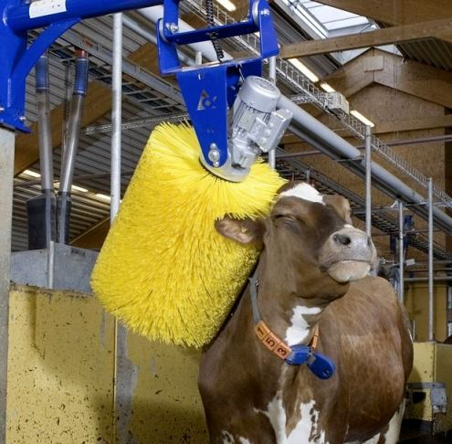 CowWash