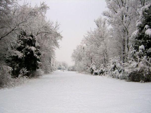 SnowyRunField