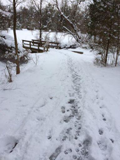 SnowOnTrail