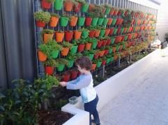 My little helper collecting essential supplies from the vertical garden.