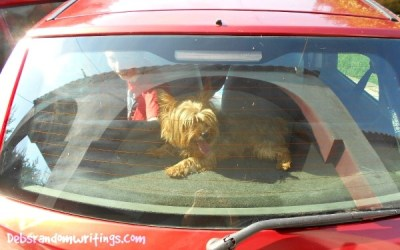 Dogs, Cars And The Sun Are A Recipe For Disaster!