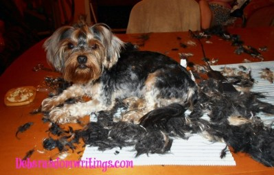 Dog Grooming For Summer…