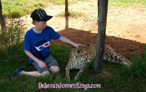 Greg's and cheetah