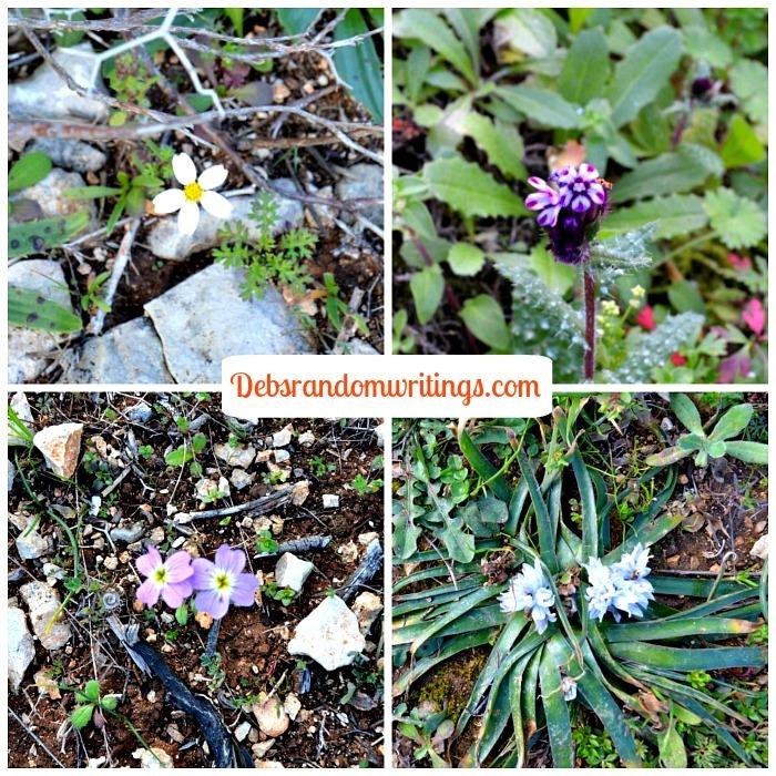 spring flowers on Zakynthos