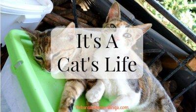 It's A Cat's Life