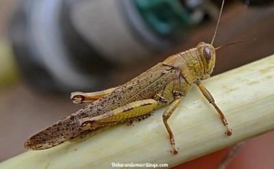 Meet Jiminy