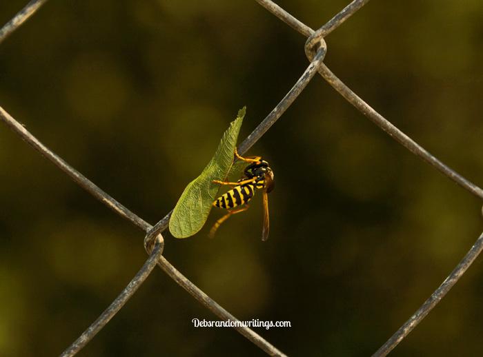 leaf eating wasp