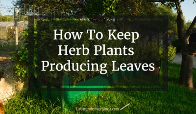 Keep those herb plant producing leaves for months.