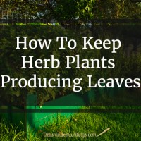 How To Keep Herb Plants Producing Leaves