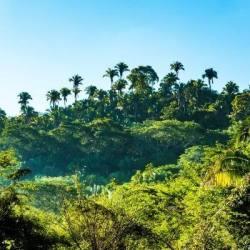 En ondertussen in het verre, tropische land #DeBudgetman