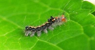 The Perils of Anti-Pesticide Hysteria