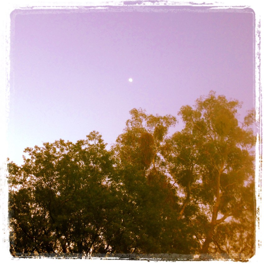 The moon in the morning sky