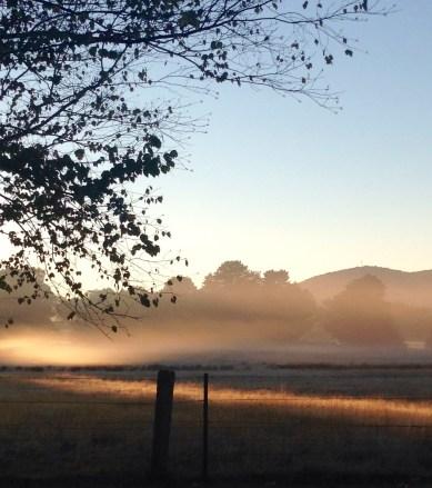 Early morning light