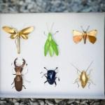 nespresso_insect_01