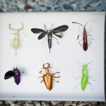 nespresso_insect_02