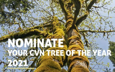 Enter your favorite tree into Comox Valley Nature's annual contest by April 1
