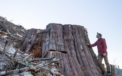 BC forest march: Tell Premier Horgan to implement Old-Growth Review Panel advice
