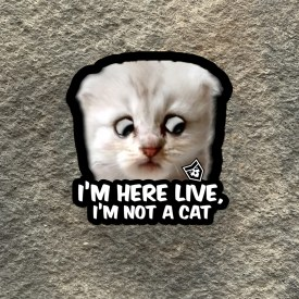 I'm Here Live, I'm not a Cat Vinyl Decal