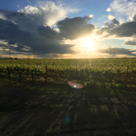 Destiny Ridge Vineyard sunset