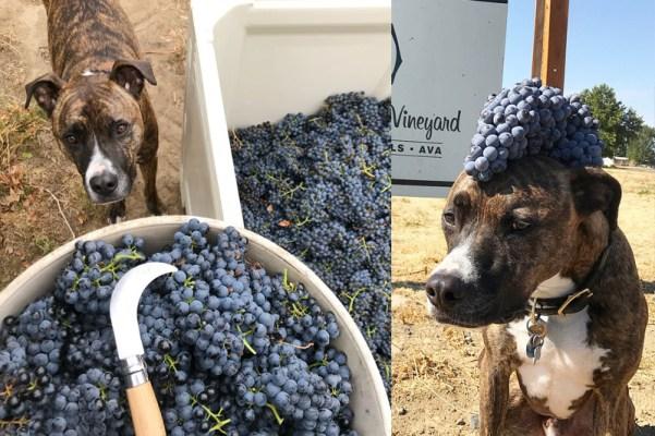 Turk helps Upsidedown Wine