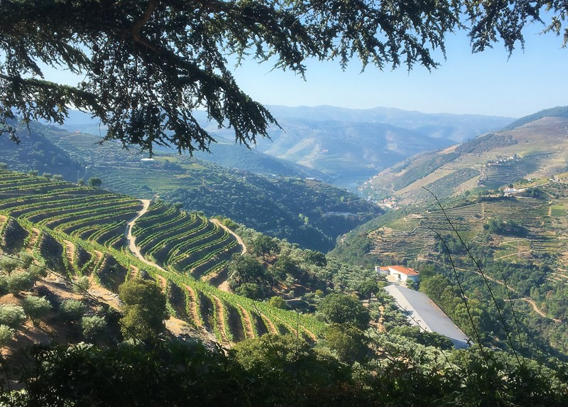 Douro Valley, Quinta do Noval