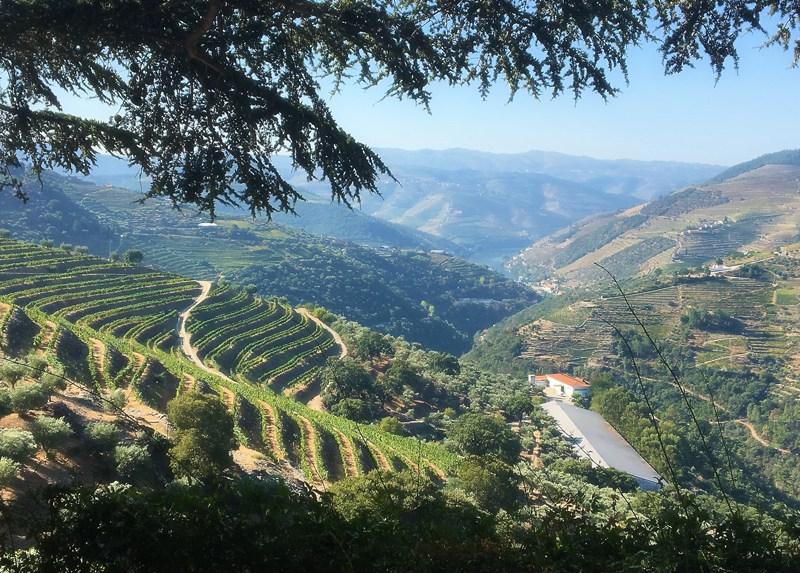Douro Valley, Quinta do Noval